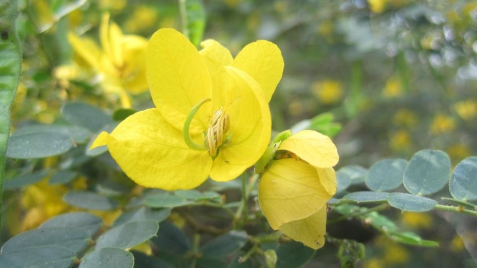 yellow flower #1