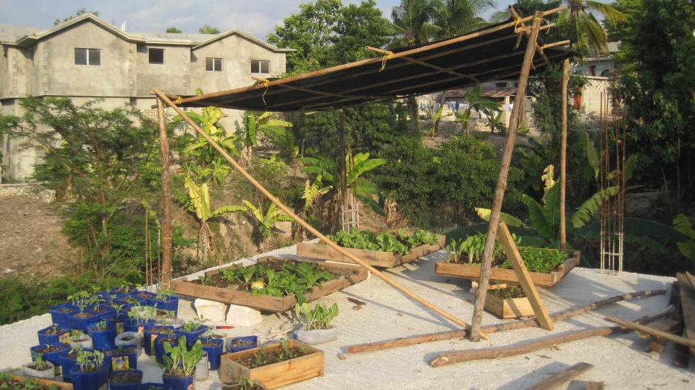 bamboo n boidee roof version 23