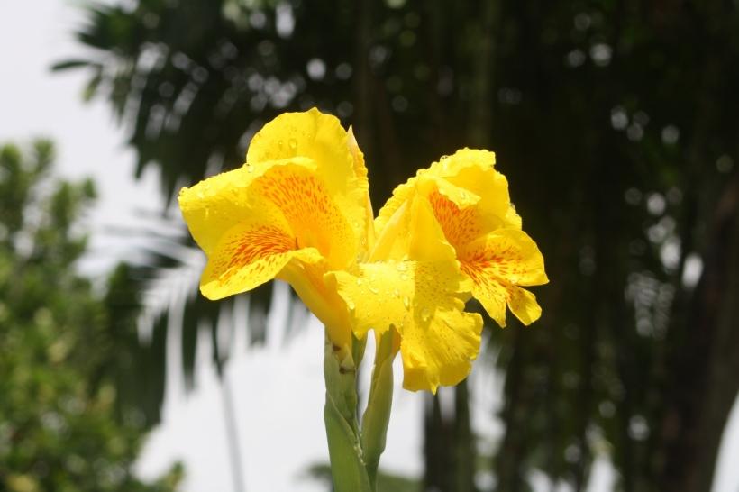 flowers on waterloo street georgetown guyana (5)