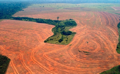 amazonian capitalism in brasil