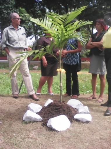 justice for crum ewing vigil - palm tree