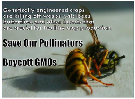genetically modified crops are killing bees and insects