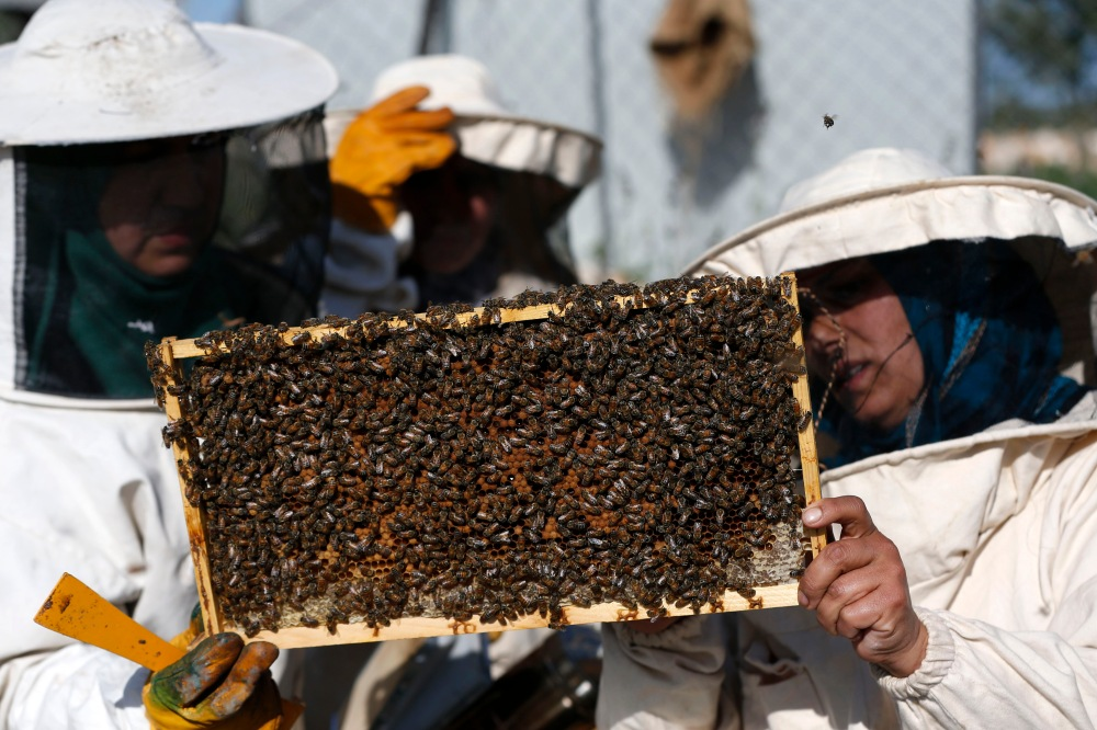 Rural women examining a honeycomb swarming with bees at an apiculture collective in Deir Ballut, north of Ramallah. A project of the Palestinian Agricultural Development Association sponsored by the EU, the collective aims to employ 150 Palestinian women. (29 February, Ahmad Gharabli/AFP/Getty Images)